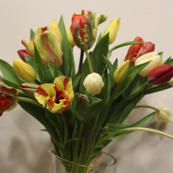 La brassée de tulipes